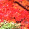 06秋 京都(06)
