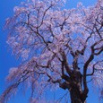 10年04月-2 福島(09)