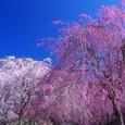 10年04月-2 福島(17)