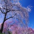 10年04月-2 福島(19)