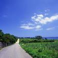 沖縄2005(04)
