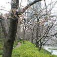 ホテルオークラの散策路(2) (虎ノ門 / 東京)
