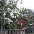 根津神社(3) (根津 / 東京)