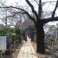 谷中霊園 (谷中 / 東京)