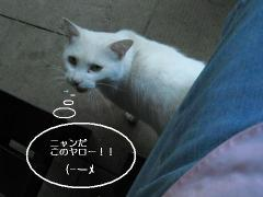 Img_0014_30